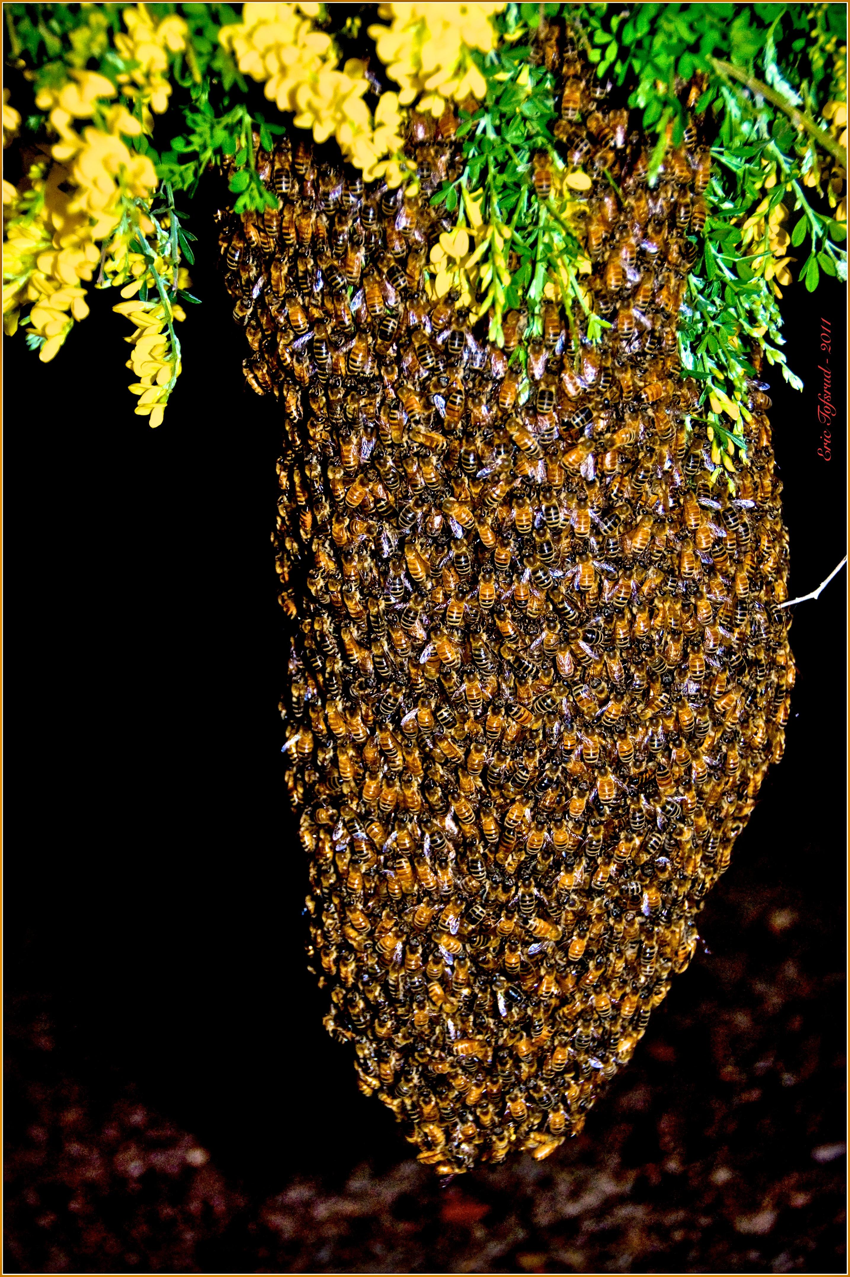 Bee-Swarm-4