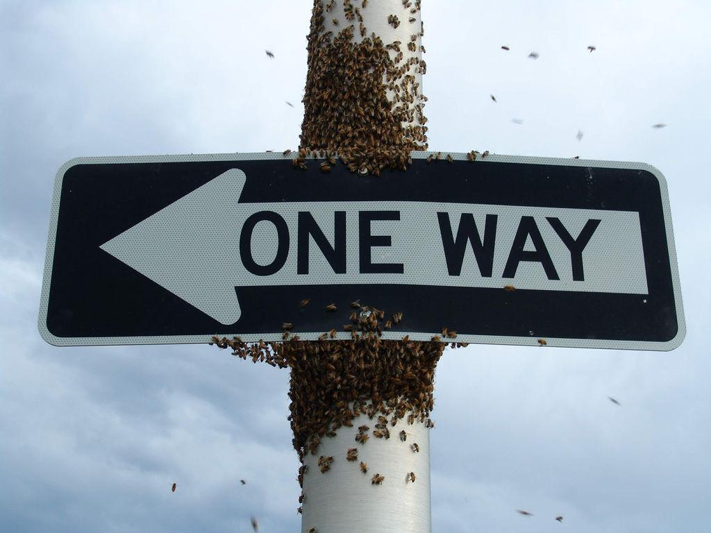 Bee-Swarm1